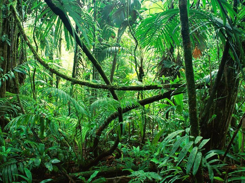 recursos de la naturaleza